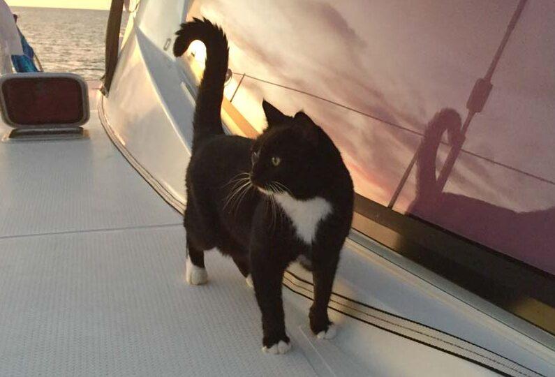 Cat On Cat: Rough Seas