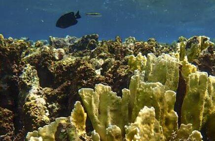 Underwater Paradise: Bonaire